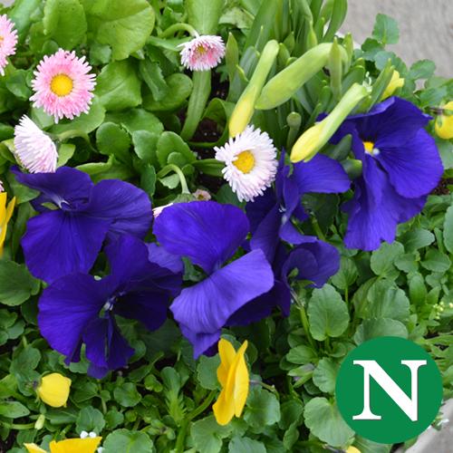 Spring Containers @ Nunan Florist & Greenhouses, Inc.