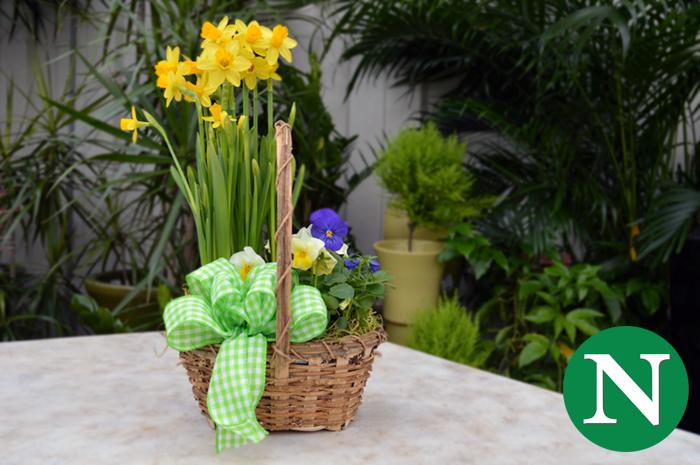 Spring Easter Basket for Kids @ Nunan Florist & Greenhouses, Inc.
